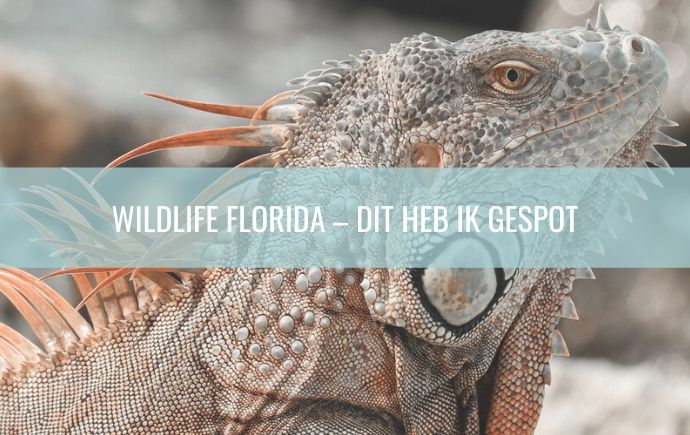 Wildlife Florida – Dit heb ik gespot